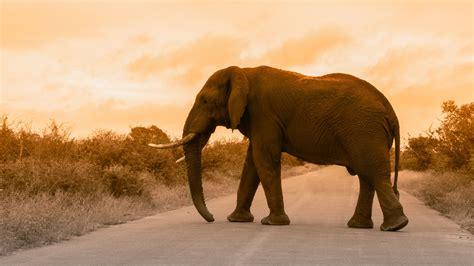 Elephant 5k Wallpaper Hd Wallpapers