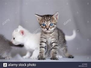 Cat Claw Angry Stock Photos & Cat Claw Angry Stock Images ...