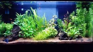 Idee Decoration Aquarium : aquatlantis 100l ~ Melissatoandfro.com Idées de Décoration