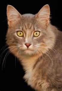 cat aids feline aids