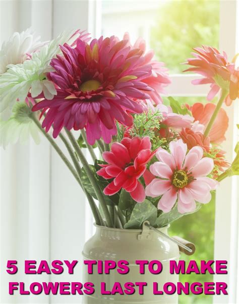 How To Make Flowers Last Longer With These Tips. Mindful Grey Paint. Curtain Hooks. Modern Desk Lamp. Rugs For Living Room. Kitchen Remodeling Tampa. How Much To Remodel Bathroom. Landscaping Gravel. Spanish Style Houses