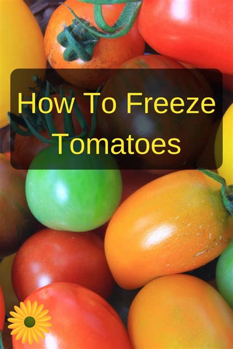 can you freeze tomatoes how to freeze tomatoes for winter