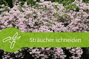Pflanzen Schneiden Kalender : str ucher schneiden anleitungen f r das fr hjahr und den sommer ~ Orissabook.com Haus und Dekorationen