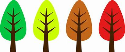 Tree Trees Clip Nature Clipart Fall Simple