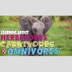 Learning About Herbivores, Carnivores, And Omnivores Youtube