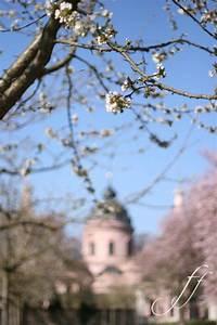 Frühstücken In Schwetzingen : la fioritura di ciliegi a schwetzingen foto e fornelli ~ A.2002-acura-tl-radio.info Haus und Dekorationen