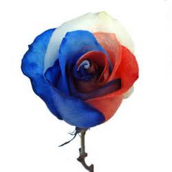 bulk baby s breath patriotic rainbow roses white and blue
