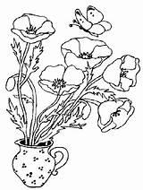 Poppy Coloring Flower Poppies Printable Flowers Bestcoloringpagesforkids sketch template