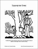 Maple Syrup Coloring Pages Printables Worksheets Tapping Tree Sucre Cabane Activities Trees Sugaring Unit Morning Sheets Crossword Sugar Dive Into sketch template