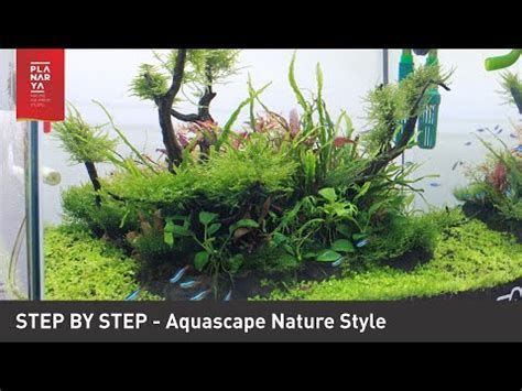 Nature Aquascape by Step By Step Aquascape Nature Style