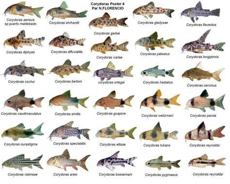 images  fish identification  pinterest