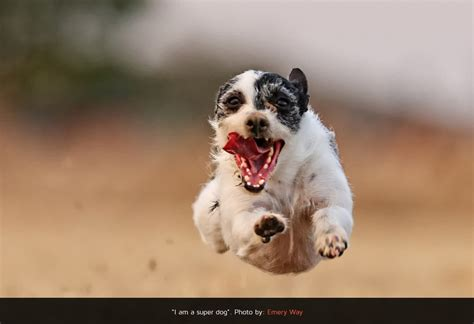 incredible dog photography