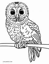 Owl Coloring Pages Baby Realistic Owls Printable Cute Cool2bkids Getcolorings sketch template