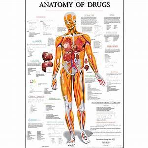 Anatomy Poster  Large   U2013 Streetdrugs