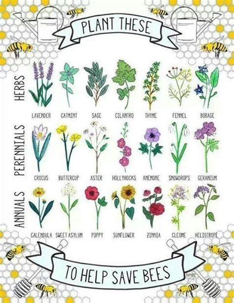 plants that attract bees garden tips tricks
