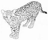 Leopard Coloring Pages Printable Animals Print Animal Sheet Getcoloringpages Results sketch template