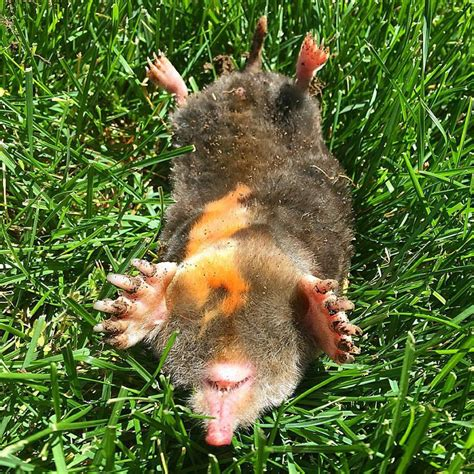 Mole Trapping & Removal Columbus, Oh  Bws  Get Rid Of Moles