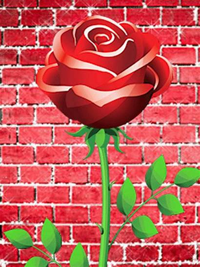 Screensavers Rose Mobile9 Cool Flower Mobile