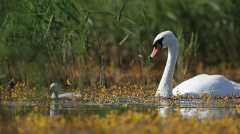 Broads Wildlife This Spring Norfolk Broads Direct