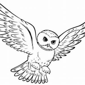 Flying Owl Coloring Pages Page Color - grig3.org