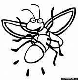 Firefly Coloring Luciernagas Colorear Dibujos Luciernaga Insetti Lucciole Lucciola Dando Pintar Luz Dibujo Animali Fireflies Poem Dibujosparacoloreargratis Insekten Poems Tiere sketch template