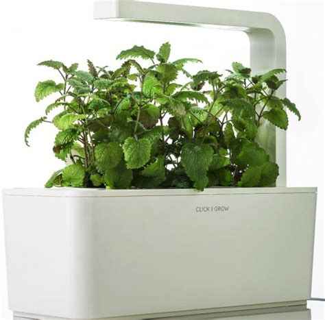 The Many Varieties Of Herb Gardening Kits You Can Choose