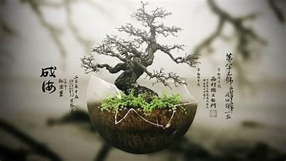 Bonsai Tree Earth Background