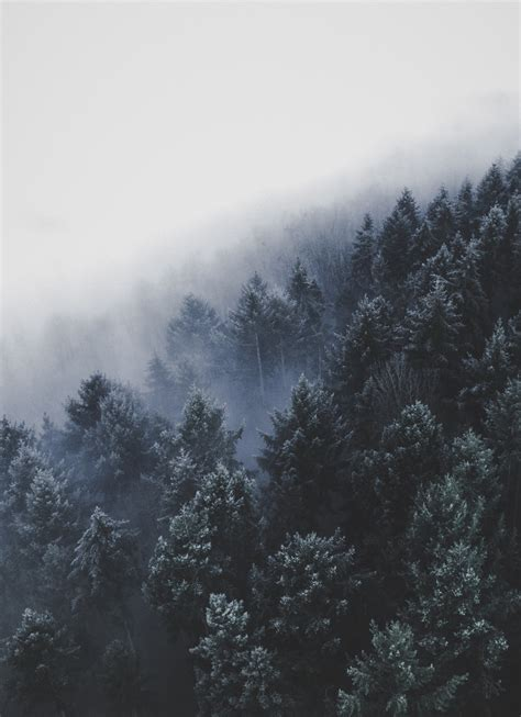 foggy germany photo  christian grab atchristianmategrab