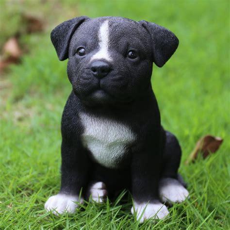 beds to buy hi line gift ltd sitting staffordshire pitbull puppy