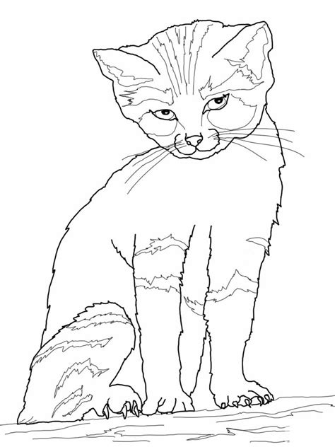 printable cat coloring pages  kids