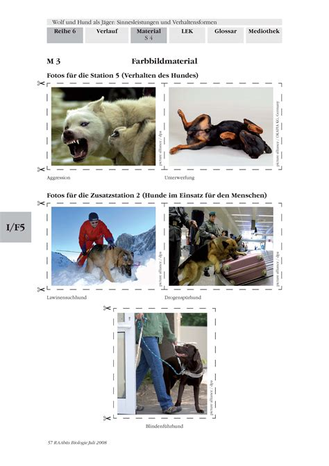wolf und hund als jaeger unterrichtsmaterial und