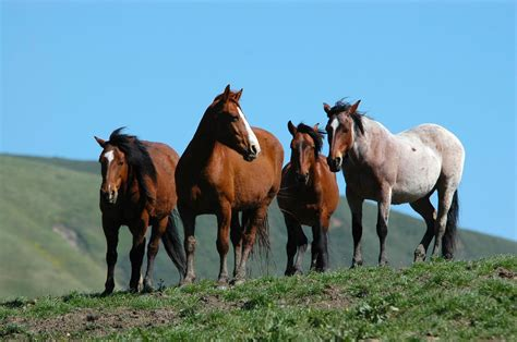how are horses rtf 4 horses frank staub wild horse journal