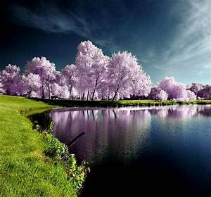 Most Beautiful Nature Photo | Full Dose