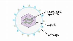 Intro To Viruses  Article