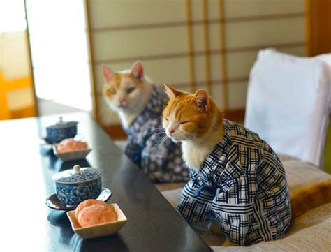 cuisine au coin du feu these cats can be my japanese tour guides any catster