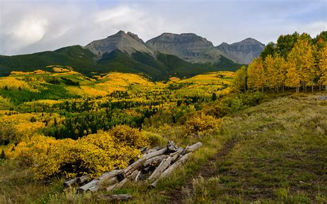 The Color Of Autumn Forest With Golden Yellow Leaves Of