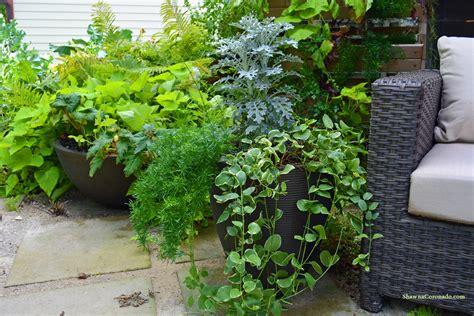 Organic Container Gardening Tips
