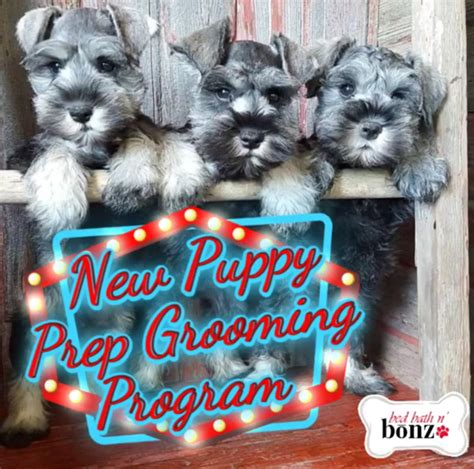 Bed Bath And Bonz by Bed Bath N Bonz Boarding Daycare Pet Grooming