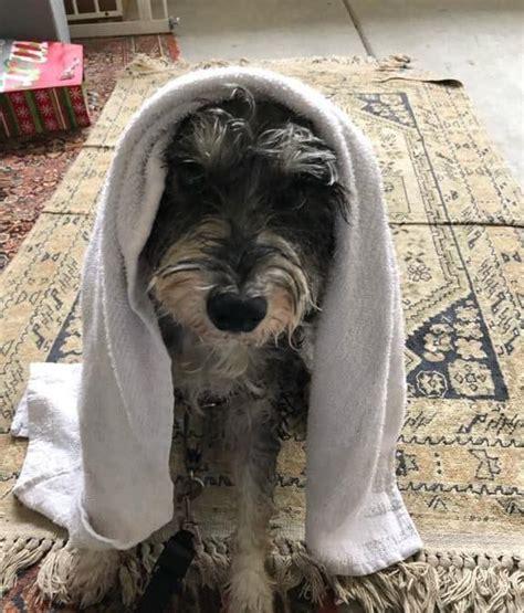 rid  dog smells   house jenlovespets