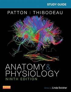 Study Guide For Anatomy  U0026 Physiology    Edition 9 By Linda Swisher Rn  Edd  Kevin T  Patton Phd