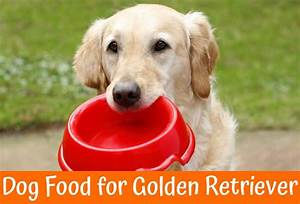 The best dog food for golden retriever review us bones for Best dog food for golden retrievers
