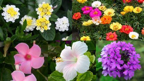 piante bellissime da giardino piante da giardino sempreverdi con fiori galleria di immagini