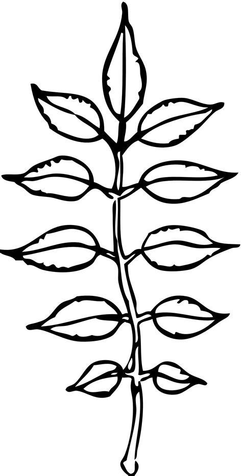 leaves black  white leaf outline clip art black