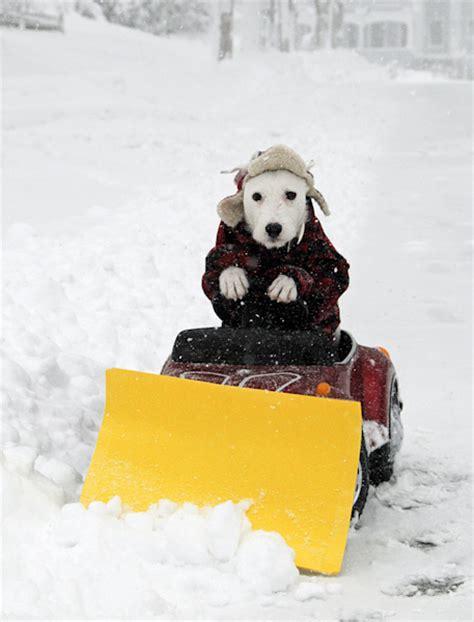 winter storm   pet chase farm veterinary hospital