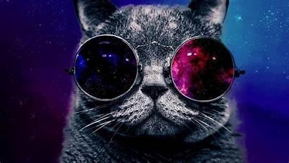 Space Cat Wallpapers Kissa Galaxy Taustakuva Serious