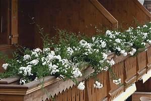 Jasmin Pflanze Winterhart : jasmin solanum sommerjasmin nachtschatten gartencenter rennbahnstrasse in berlin wei ensee ~ Frokenaadalensverden.com Haus und Dekorationen