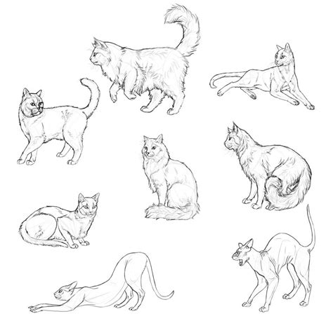 draw cats monika zagrobelnas detailed approach