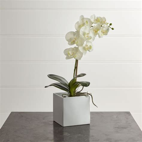large artificial orchid reviews crate  barrel