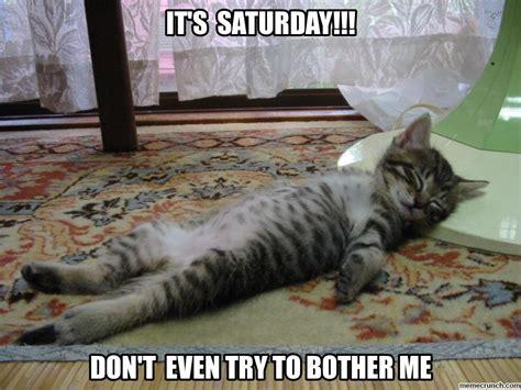 Lazy Cat Meme - lazy cat