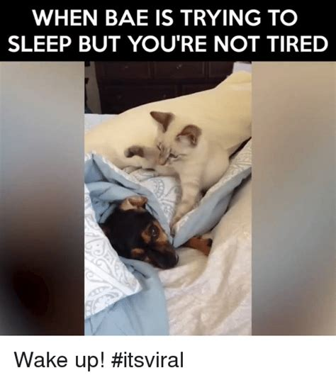 Trying To Sleep Meme - 25 best memes about trying to sleep trying to sleep memes